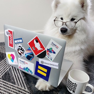 Samoyed wearing glasses looking at a laptop covered in Drupal stickers